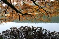 Saisonschluss:Wenn der erste Frost kommt, ist die Pilzzeit vorbei. Im goldenen Herbst kann sich die Suche noch lohnen.