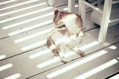 Die Katze im Pinky Beach Restaurant lebt standesgemäß. Nicht selten fällt ein Stück Hummer auf den Boden.