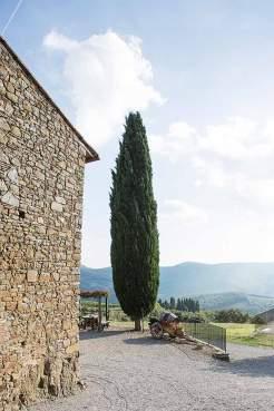 Hoffähig: Ein Zypressenbaum im Weiler Castelvecchi bei Radda, der zu einem Agriturismo mit Zimmern für Gäste umgebaut wurde.