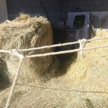 passer l'extrémité de la corde dans le noeud le plus éloigné après avoir fait le tour de l'arbre
