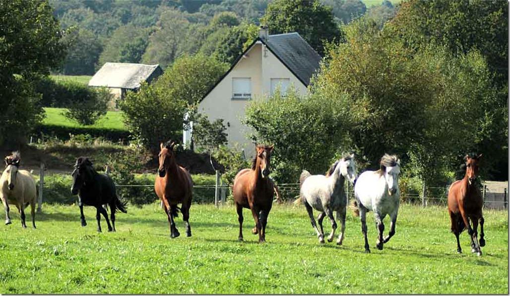 chevaux-aurelie
