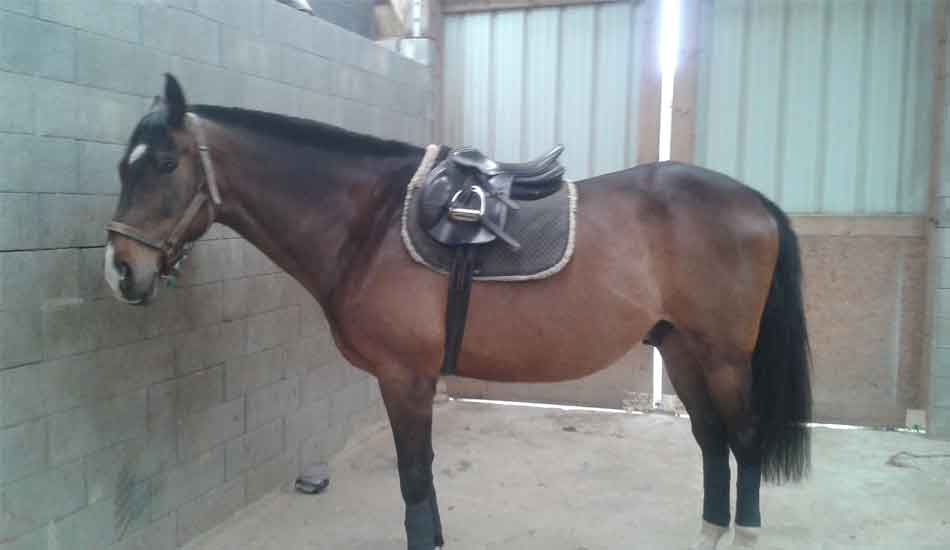 cheval quantuveu selle