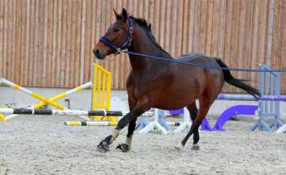 longer cheval