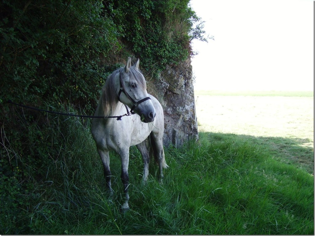 mon cheval luis