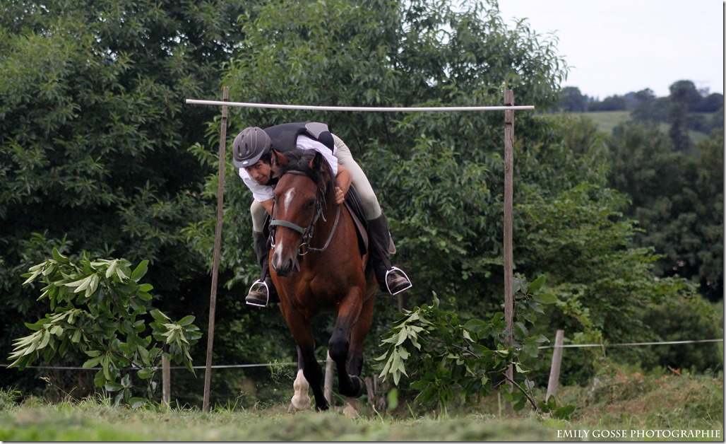 exercice à cheval branches basses au pas