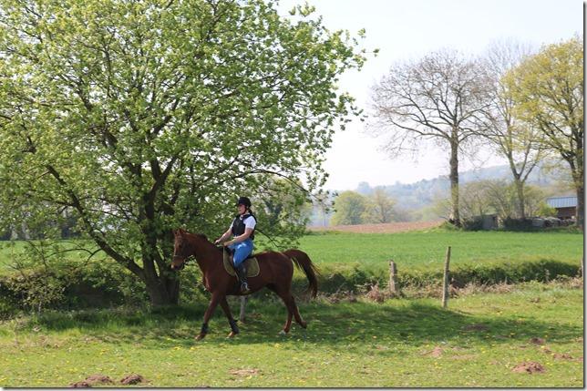 echauffement cheval en terrain varié