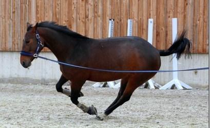 cheval qui bouscule en main