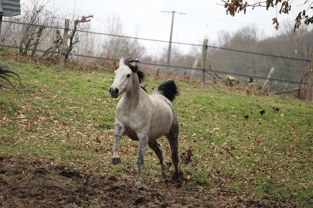 détendre un cheval nerveux au paddock