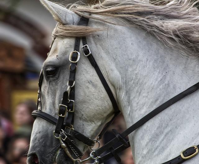 cheval nerveux avec une embouchure dure