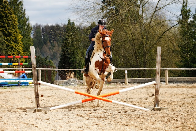 cheval obstacle croisillon