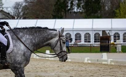 echauffement du cheval rênes longues