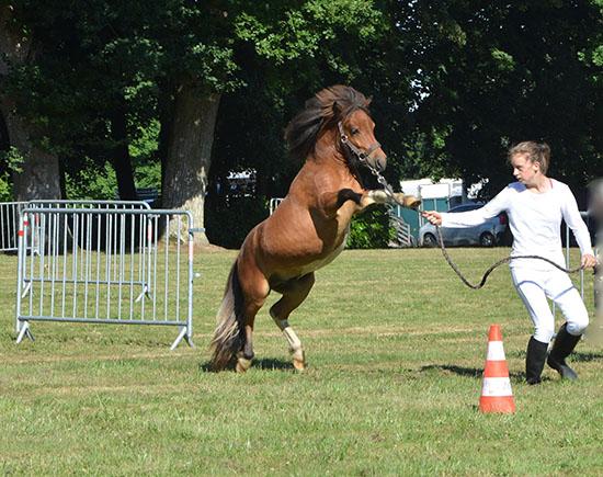 L'immobilité du cheval assure la sécurité du cavalier A dada mon dadou