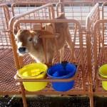livestock flooring calf stall