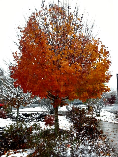 Autumn in the snow. Asheville, NC. Blueridge Parkway Visitors Center. November 2014