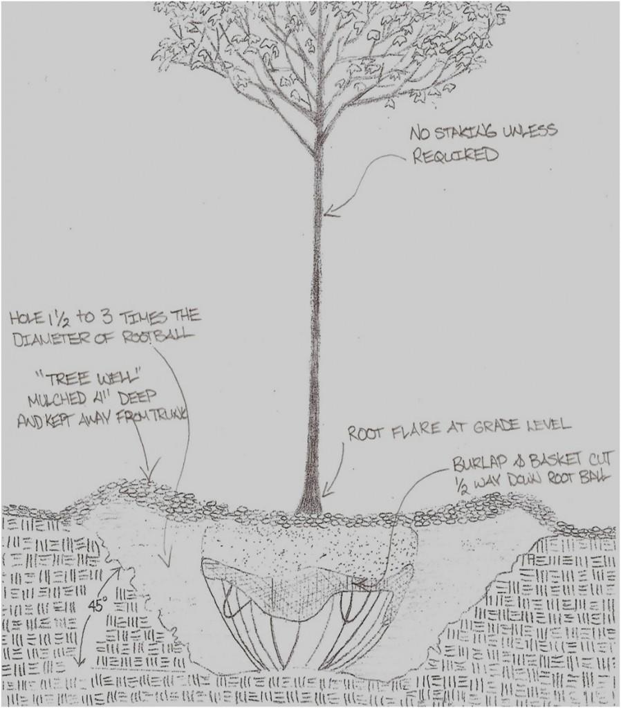 medium resolution of tree planting detail