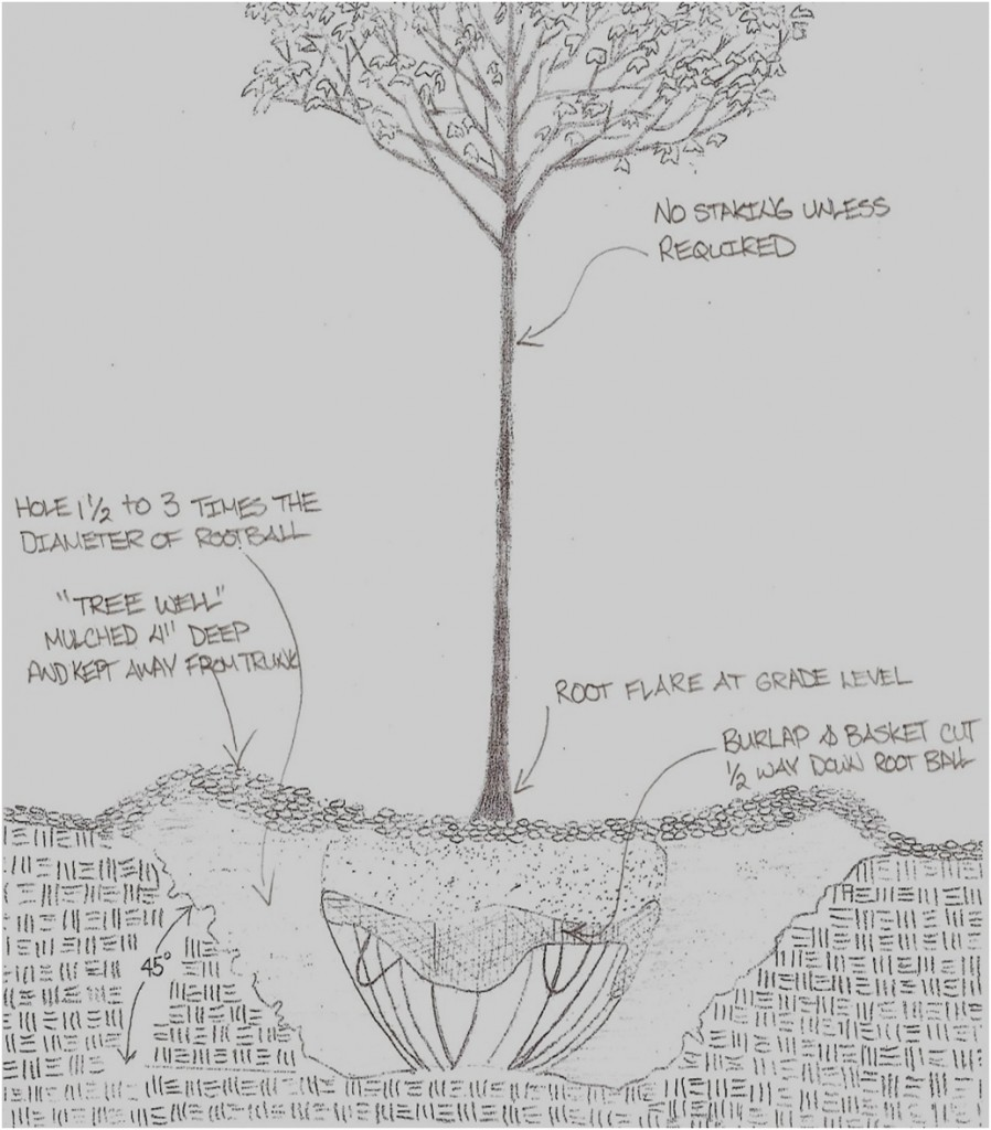hight resolution of tree planting detail