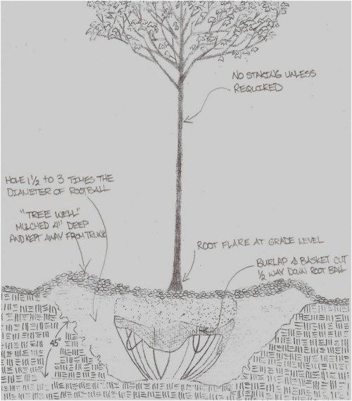 small resolution of tree planting detail