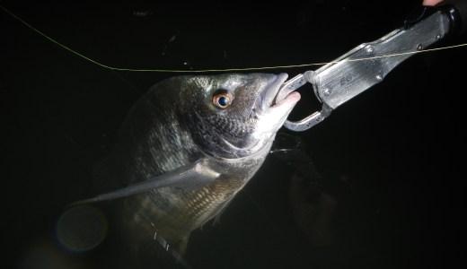 【浜名湖ルアー】 チニング、シーバス釣り。シンキングペンシル最強ルアーはクロストリガー。