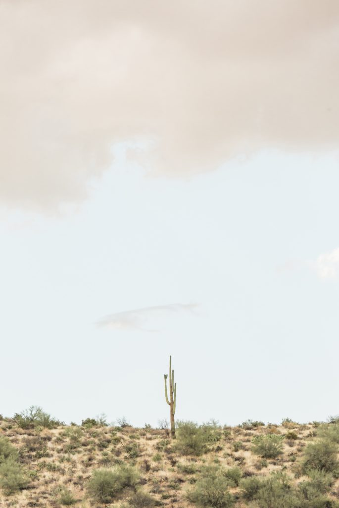a saguaro on the horizon