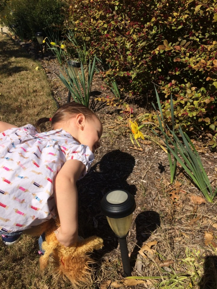 Eliza looking at our daffodils