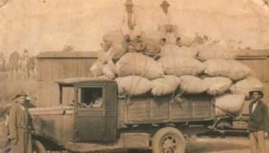 Primeira safra de algodão do ainda Patrimônio Adamantina - 1947