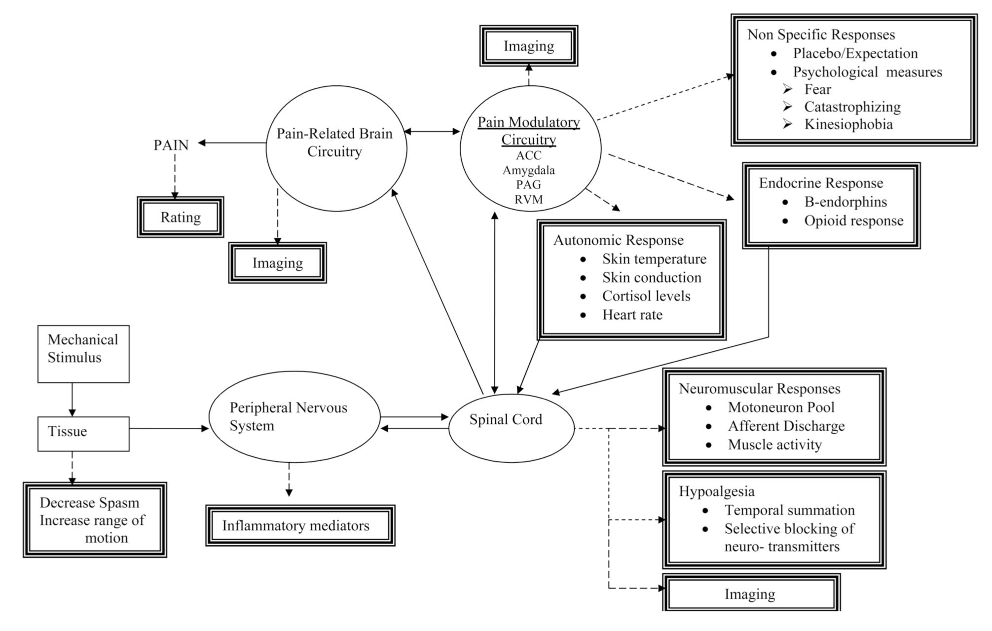 Manual Therapies « adamdegruchyphysio