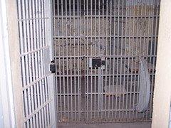 Am nächsten Morgen  hing Jutta Kraftschek an diesem Gitter  - nach der  Dreschorgie  wurde sie erhängt !