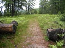 Sand Point Marsh Trail