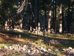 2011October00NMTrip_natlSolar_muleDeer