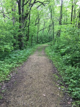 Flint Rock Nature Trail