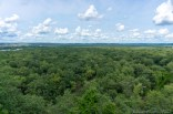 Tower Hill State Park - Forest View
