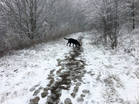 Max Patch Mountain - Reed dog enjoying the snow
