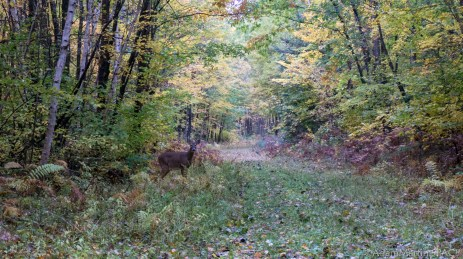Governor Thompson State Park – Whitetail Deer