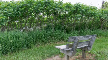Richard Bong State Recreation Area - Bench with a bad view