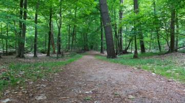 Kohler-Andrae State Park - Accessible trail on Woodland Dunes Nature Trail