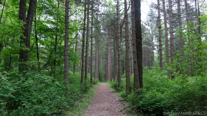 Kohler-Andrae State Park - Tall pines on Woodland Dunes Nature Trail