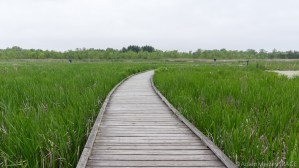 Kohler-Andrae State Park - Boardwalk at Black River Marsh