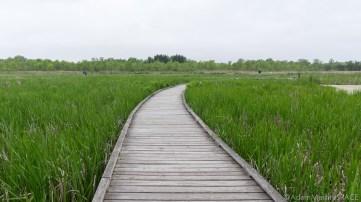 Kohler-Andrae State Park - Boardwalk at Black River Marsh