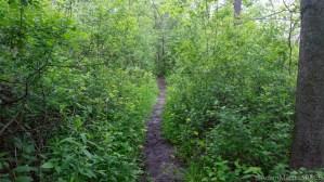 Sauk Creek Falls - Trail on south side of creek