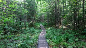 Lost Creek Falls - Trail has large sections of raised boardwalk