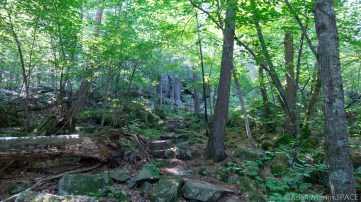 Interstate State Park - Peaceful forest views on Echo Canyon Trail segment