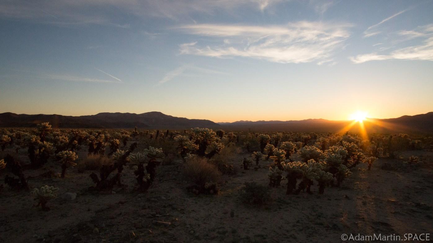 Joshua Tree - Cholla Cactus Garden
