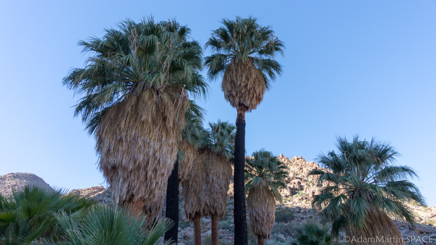 Joshua Tree - Fortynine Palms Oasis