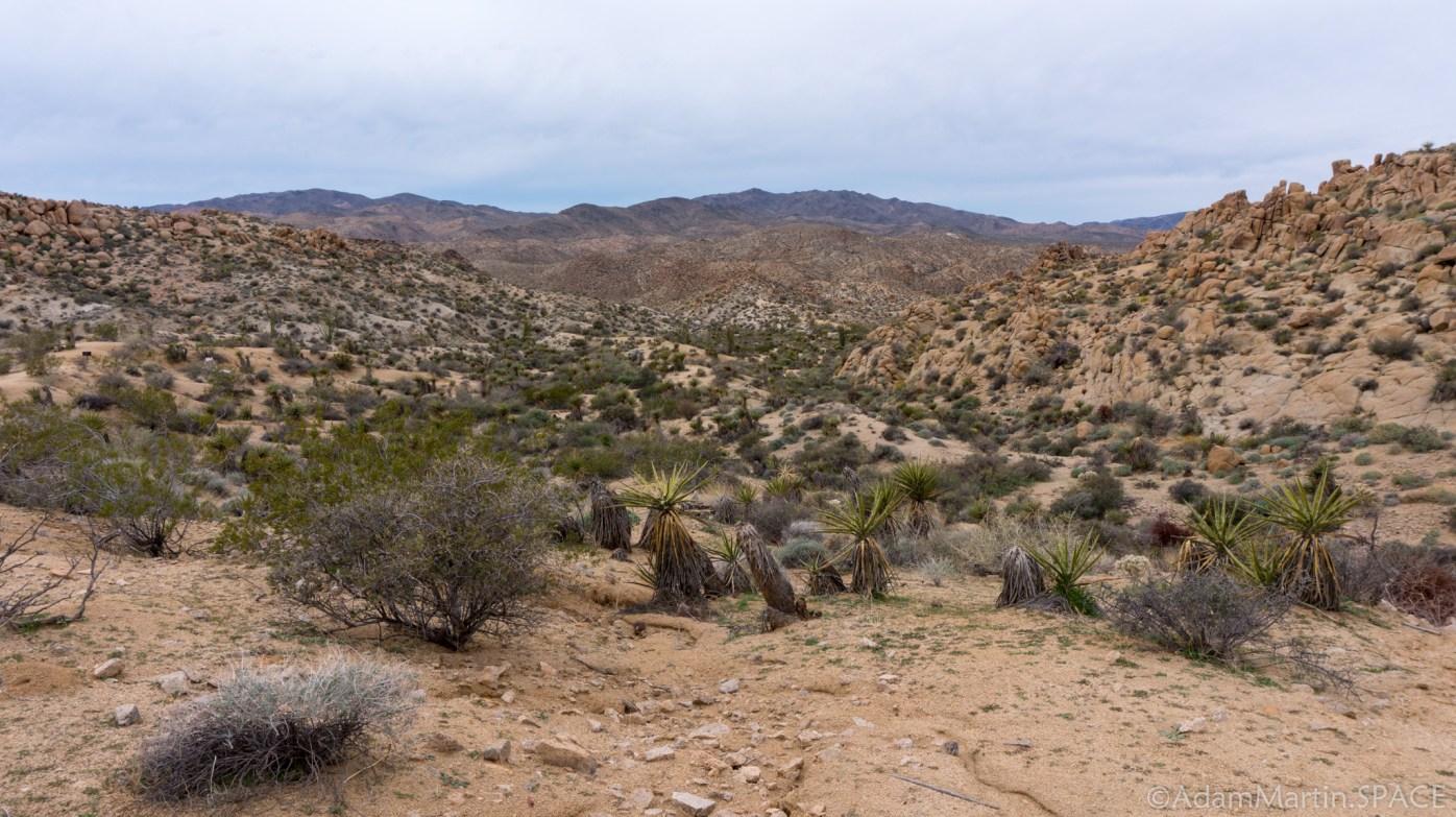 Joshua Tree - Lost Palms Oasis Trail