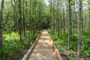Boardwalk on trail to Morgan Falls & St Peter's Dome