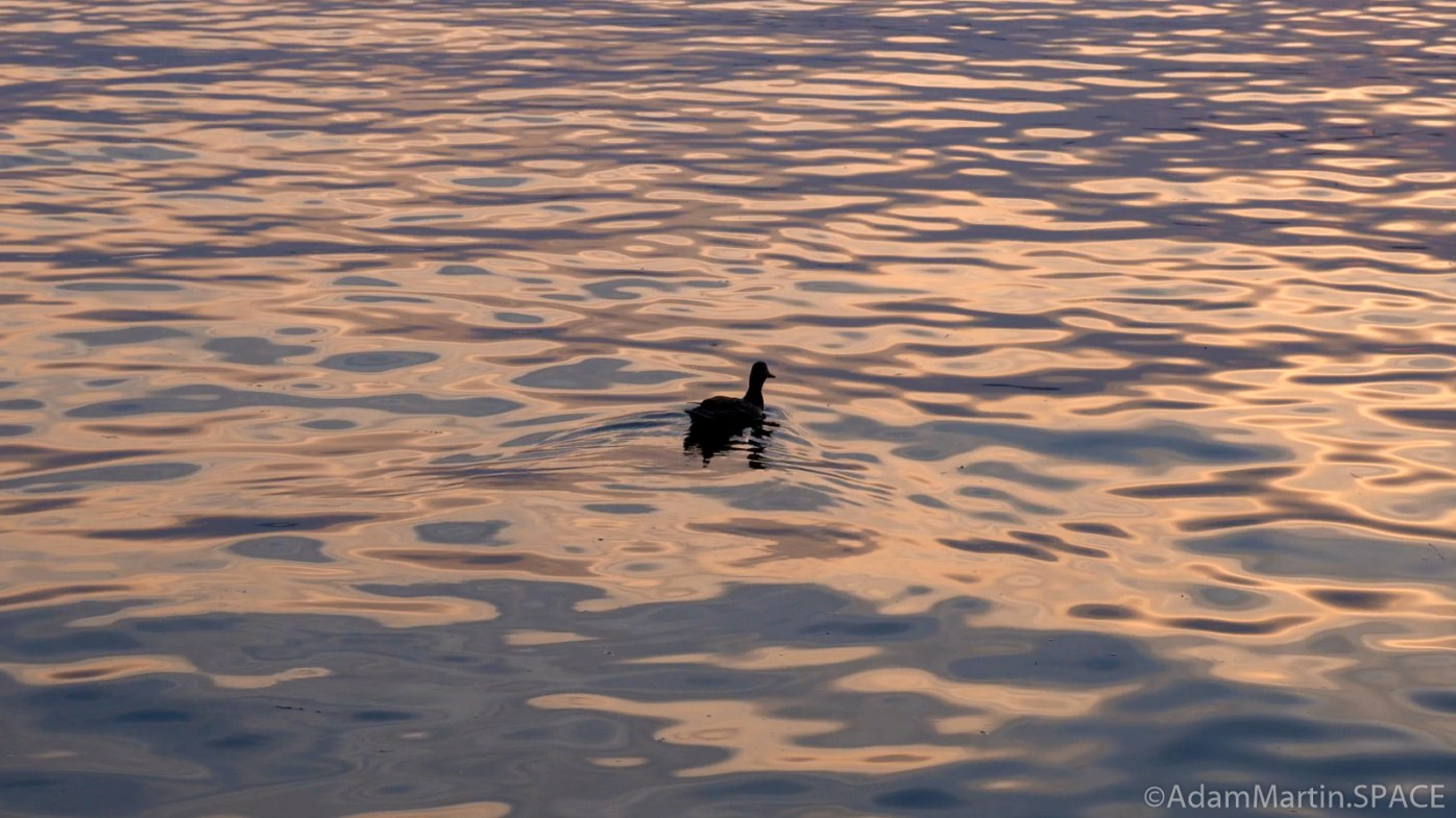 Madeline Island - Duck at the La Pointe ferry docks