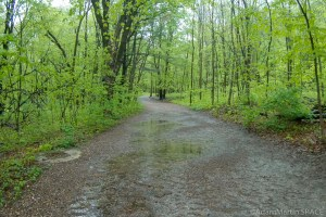 Devil's Lake State Park - East Bluff Trail on a rainy day