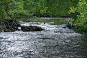 Waupaca Falls - Small little rapids upstream of the falls