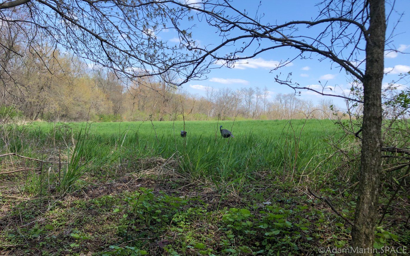 Decoys set up for turkey hunting