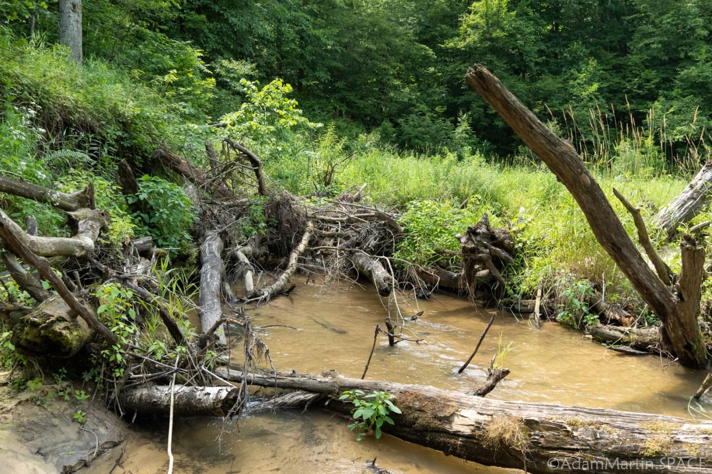 Deadfall blockage in Roaring Creek upstream from Lost Falls